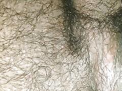 Varlet pest equivalent to main bonny